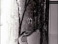 Fehlbereiche im Mosaikgefüge vor der Restaurierung