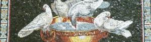 Tauben des Plinius_1large
